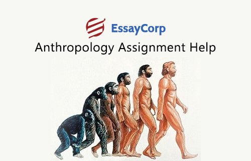 assignment 1 be an anthropologist