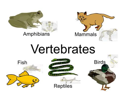 Invertebrate essay question