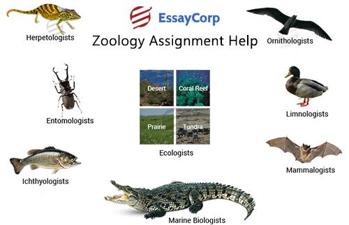 Zoology homework help