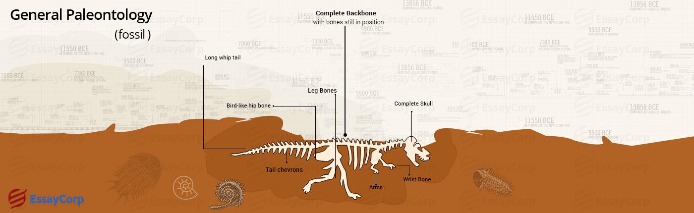 paleontology-assignment-help