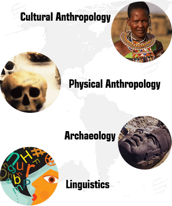 roles and responsibilities of an anthropologist